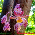 1-large-orchid-copy